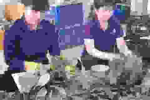 Long An: 22 cử nhân đại học đầu tiên về làm ở các HTX nông nghiệp