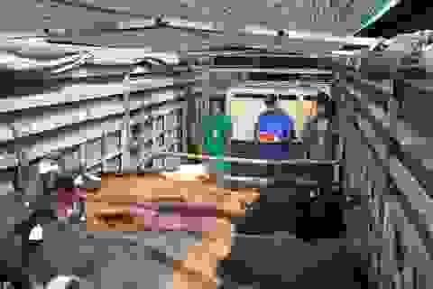 """200 cô bò sữa hữu cơ """"cưỡi"""" máy bay từ Úc về Việt Nam"""