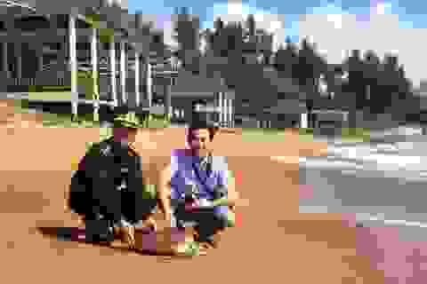 Cứu hộ 2 cá thể rùa biển mắc lưới ngư dân