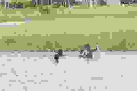 Bạc Liêu: Hàng chục ngàn học sinh chưa biết bơi