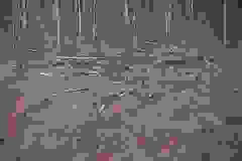 Cảnh cáo một phó giám đốc sở vì sai phạm trong giao khoán đất rừng