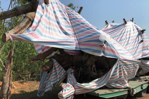 """CSGT tiếp tục bắt giữ xe chở cây """"quái thú"""""""