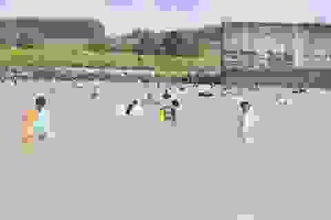 Thủy điện đóng cửa đập sau 1 tháng xả lũ, dân đổ xô đi bắt cá