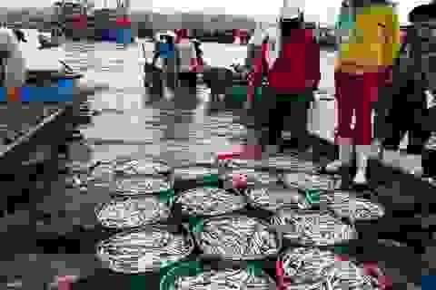 """Bắt trúng luồng cá cơm, ngư dân """"bỏ túi"""" tiền triệu đầu tháng 10"""