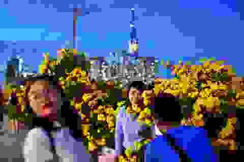 """""""Sửng sốt"""" với hàng hoa chuông vàng ở Thủ Thiêm"""