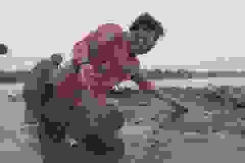 Một xác cá voi với 115 cốc nhựa trong bụng ở Indonesia