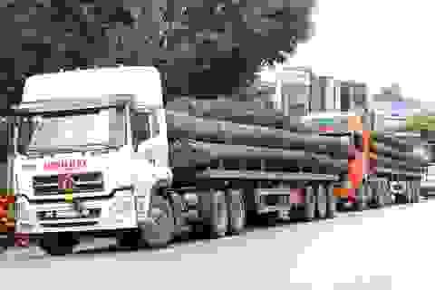 Tạm giữ 4 xe container chở hàng chục cây gỗ khủng trên QL1