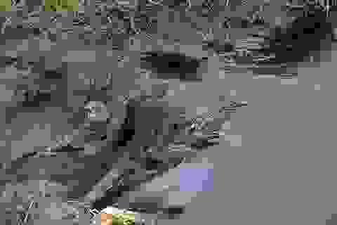 Doanh nghiệp xả trực tiếp nước thải đen ngòm, hôi thối ra môi trường