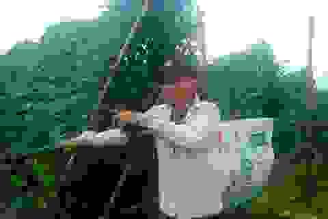 Bị mưa lũ tàn phá, nông dân lại phải trắng đêm canh trộm nông sản
