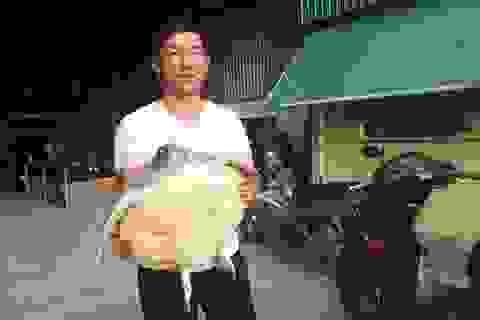 Mua rùa biển nặng 10kg rồi giao nộp cho cơ quan chức năng