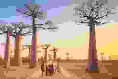 Châu Phi: 16 địa danh đẹp ngỡ ngàng