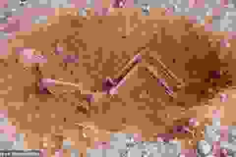 Hài cốt người mẹ giàu có ôm chặt con trong ngôi mộ cổ 1500 năm tuổi
