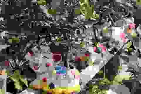 Heo vàng 5 triệu đồng cõng quất bonsai chào tết Kỷ Hợi 2019