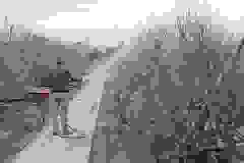 Không khí lạnh tràn về ủng hộ làng đào Nhật Tân trước dịp tết