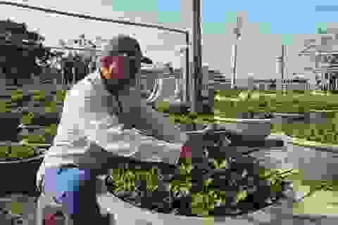 Học nghề trồng hoa, nông dân bỏ túi mỗi năm hơn trăm triệu