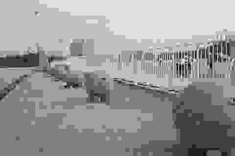 """Bất ngờ di chuyển 40 quả bóng xích tại sân Mỹ Đình để """"lấy hên""""?"""