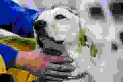 Chú chó dũng cảm cứu người trong trận động đất tại Đài Loan