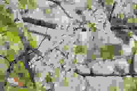 Hẹn hò với những mùa hoa xuân
