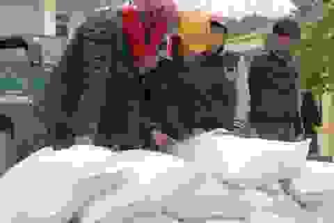 Phân bổ hơn 1.000 tấn gạo cho học sinh trong học kỳ 2 năm học 2017 - 2018