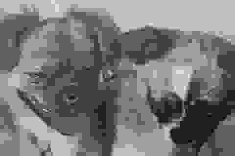 Trung Quốc tiết lộ sứ mệnh bí mật đưa chó vào vũ trụ