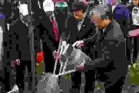 Hàng vạn cây xanh được trồng sau Lễ phát động Tết trồng cây ở Bắc Ninh, Quảng Ninh