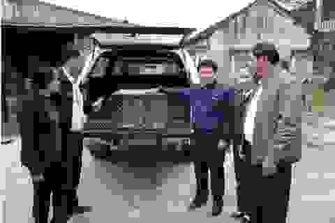 Người dân tự nguyện giao nộp khỉ vàng để thả về tự nhiên