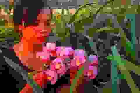"""""""Hái"""" nửa tỷ đồng/năm từ trồng hoa địa lan bán Tết"""