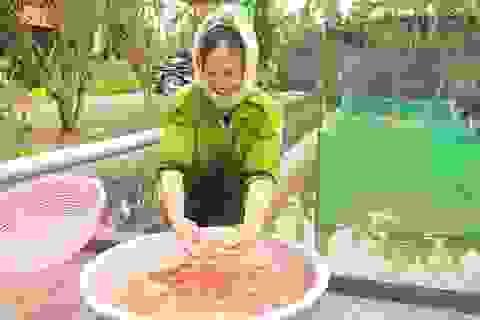 Tết ấm no nhờ nuôi cá chép đỏ phục vụ ngày Táo quân về trời