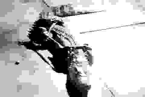 Đang làm rõ tin báo cá sấu xuất hiện trên sông Ông Đốc