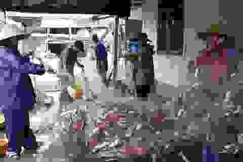 """""""Sướng mắt"""" xem mẻ lưới gần 1 tấn cá của ngư dân Hà Tĩnh"""