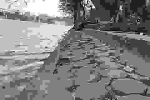 Lát đá toàn bộ vỉa hè hồ Gươm: Thành cái bẫy khi trời mưa?