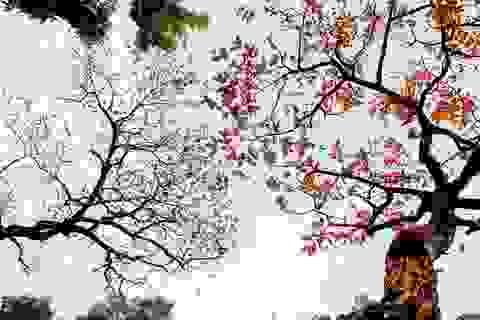 Mùa cây thay lá, Hà Nội đẹp mê hồn khiến bao người đắm say