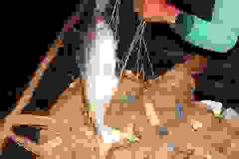 Trắng đêm cùng người dân câu cá bông lau