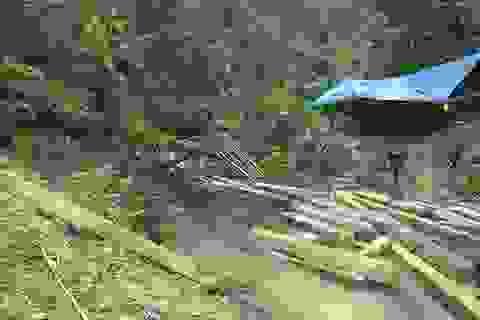 Vụ phá rừng phòng hộ tại Quảng Bình: Ba kiểm lâm tự nhận hình thức kỷ luật