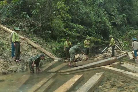 Cận cảnh hiện trường phát hiện vụ phá rừng nghiêm trọng ở Quảng Bình