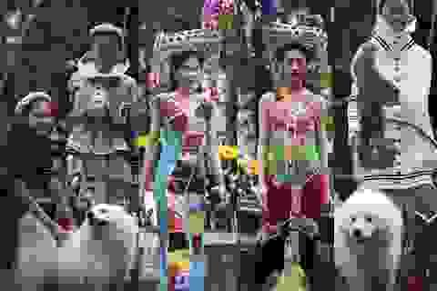 Người mẫu đội ngựa vàng mã, dắt cún cưng sang chảnh lên sàn diễn thời trang