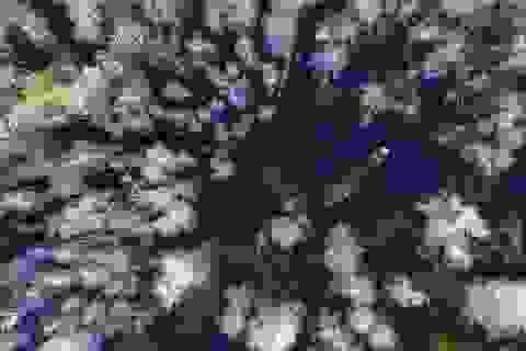 """Miền sông nước Đồng Tháp """"đẹp lạ"""" tại giải ảnh quốc tế"""