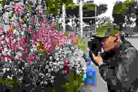 Choáng ngợp trước khung cảnh hoa anh đào khoe sắc tuyệt đẹp giữa Hà Nội