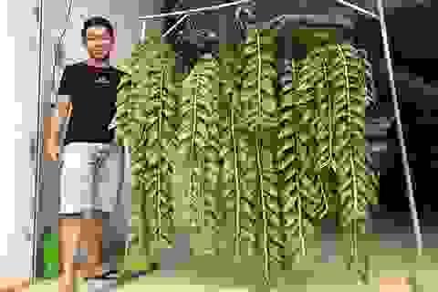 """Mê lan rừng từ nhỏ, chàng quản lý 9x sở hữu vườn lan """"khủng"""""""