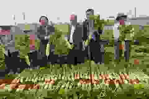 Cú bắt tay giữa hai doanh nghiệp Việt – Nam biến củ cải ế thừa thành mũi nhọn xuất khẩu