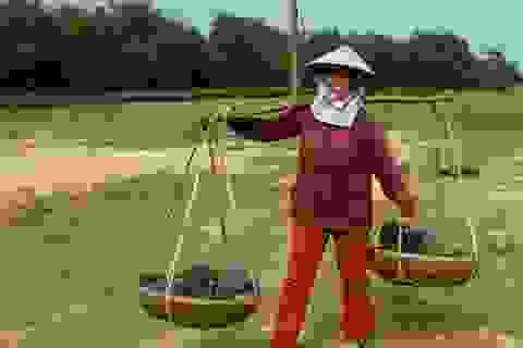 """Thị trường Trung Quốc """"ăn hàng"""" dưa hấu, nông dân phấn khởi thu lãi"""