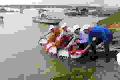 Thả 1 tấn cá giống xuống sông, 5 vạn tôm giống xuống biển