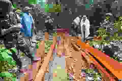 Vụ phá rừng phòng hộ tại Quảng Bình: Gần 100m3 gỗ bị đốn hạ