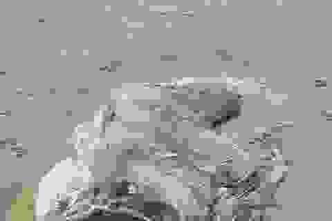 """Australia: Bí ẩn sinh vật giống """"thủy quái"""" trôi dạt vào bờ biển"""