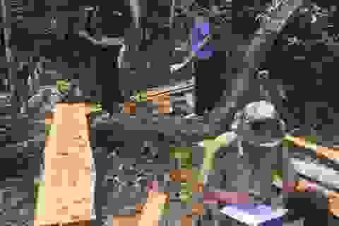 Lâm tặc phá rừng phòng hộ, nửa tháng sau chủ rừng mới phát hiện