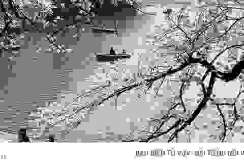 Ngất ngây trước cảnh hoa anh đào nở rộ, cánh hoa phủ sông hồ ở Tokyo
