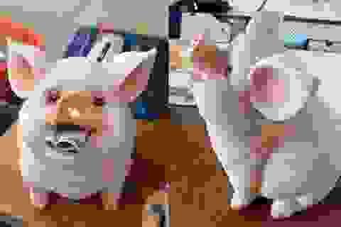 Chú 'lợn ăn tiền' gây sốt: Quá yêu, chị em xếp hàng chờ mua