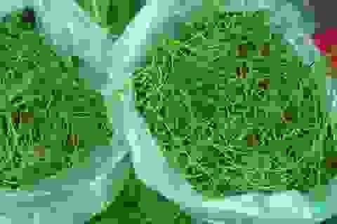 Bát canh hoa rau ngót rừng: Ngọt lừ, đắt gấp đôi thịt bò Mỹ