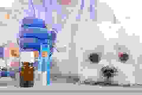 Kinh tế khủng hoảng, dân Venezuela phải tranh giành dùng thuốc của động vật