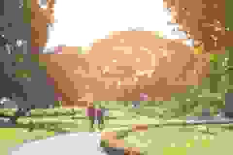 Tiếp xúc nhiều với ánh nắng mặt trời làm giảm hàm lượng cholesterol